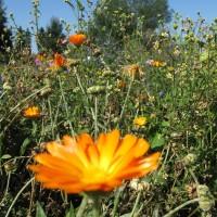 [:de]Blumenwiese[:en]Fowering meadow