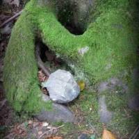Seltsame Symbole: ein Stein in einer Wurzelhöhle
