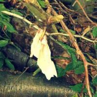Seltsame Symbole: Ein blutiges Tuch