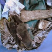[:de]Tütenweise Müll[:en]Bags full of trash
