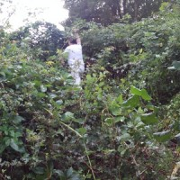 [:de]Ab durch das Dickicht mit dem Gertel[:en]Through the jungle with the pruning knife