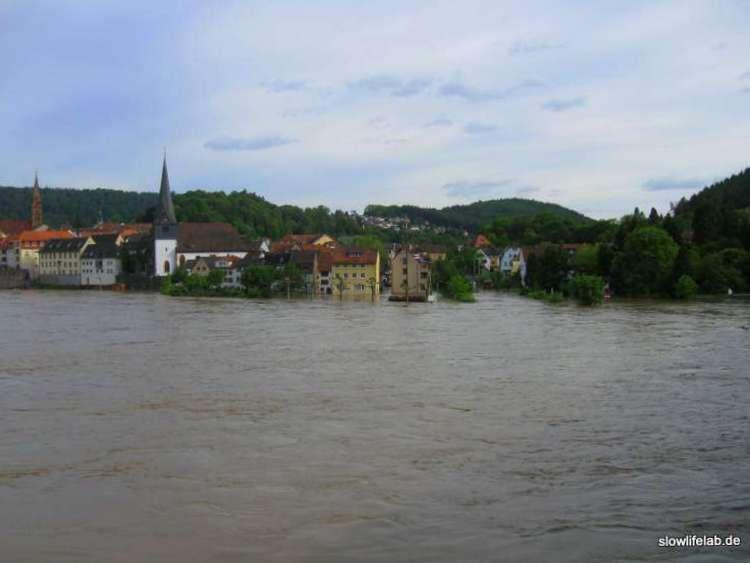 Blick auf die Elsenz-Mündung