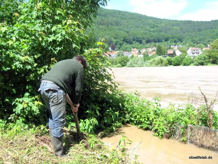Herzblatt befestigt den Damm und hofft dass er nicht überschwemmt wird.